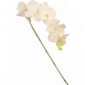 CHA 49204 STELO ORCHIDEA SUPERIOR WHITE