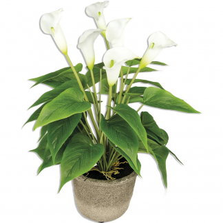 CHI 48747-47654 PIANTA CALLA REAL TOUCH X6 H45 WHITE KLAMORE