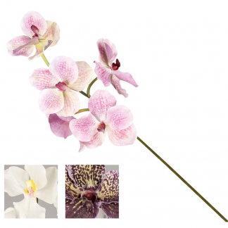 YIM 55254 STELO ORCHIDEA THAI 73CM 3ASS.