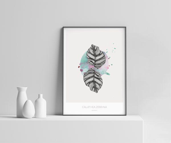 Calathea plakat   Sebra plante   botanisk illustrasjon botanica løv plante akvarell interiør håndtegnet Ohoi Studio