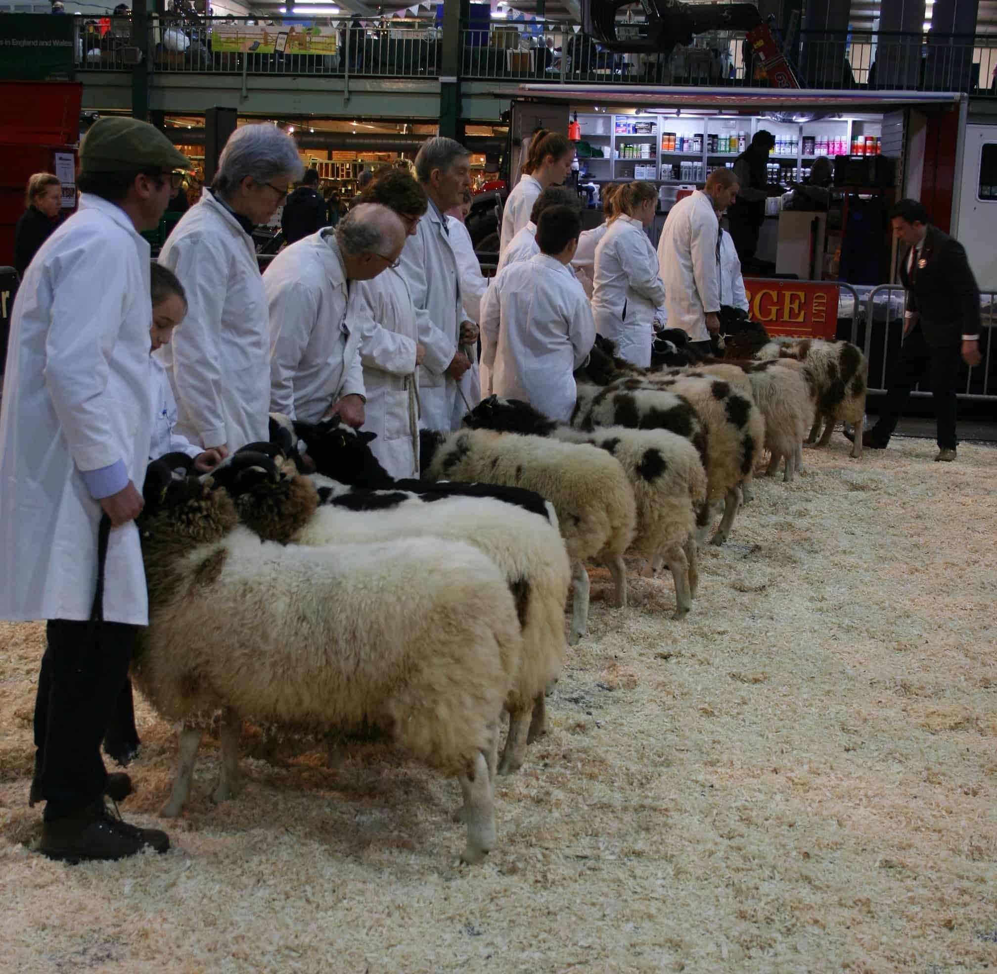 jacob line up english winter fair