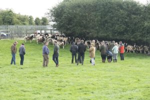 open day members in field with sheep