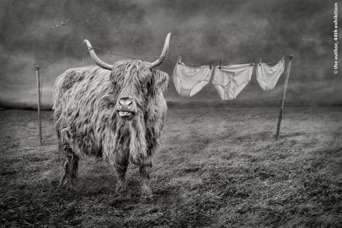 SPS Ribbon-My Life is Pants-Lynne Morris AFIAP DPAGB AWPF ABPE-Wales
