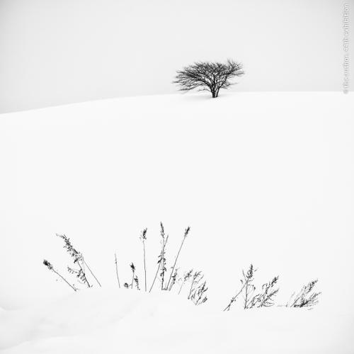 SPS Ribbon-Tree and FernsEdit2-Brian Clark MPAGB-Scotland