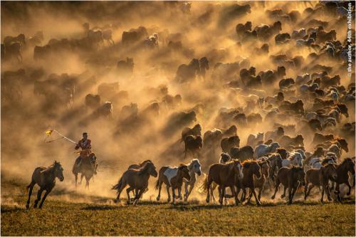 GPU Gold medal-Horses Charging 6-Lee Eng Tan-Singapore