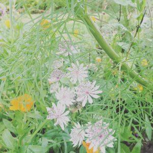 växter Lönnbacka
