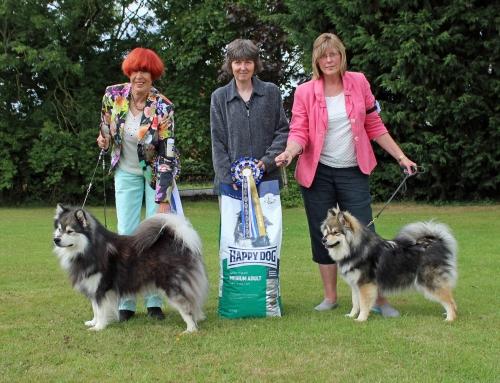Finnish Lapphund Club of GB open Show 2015