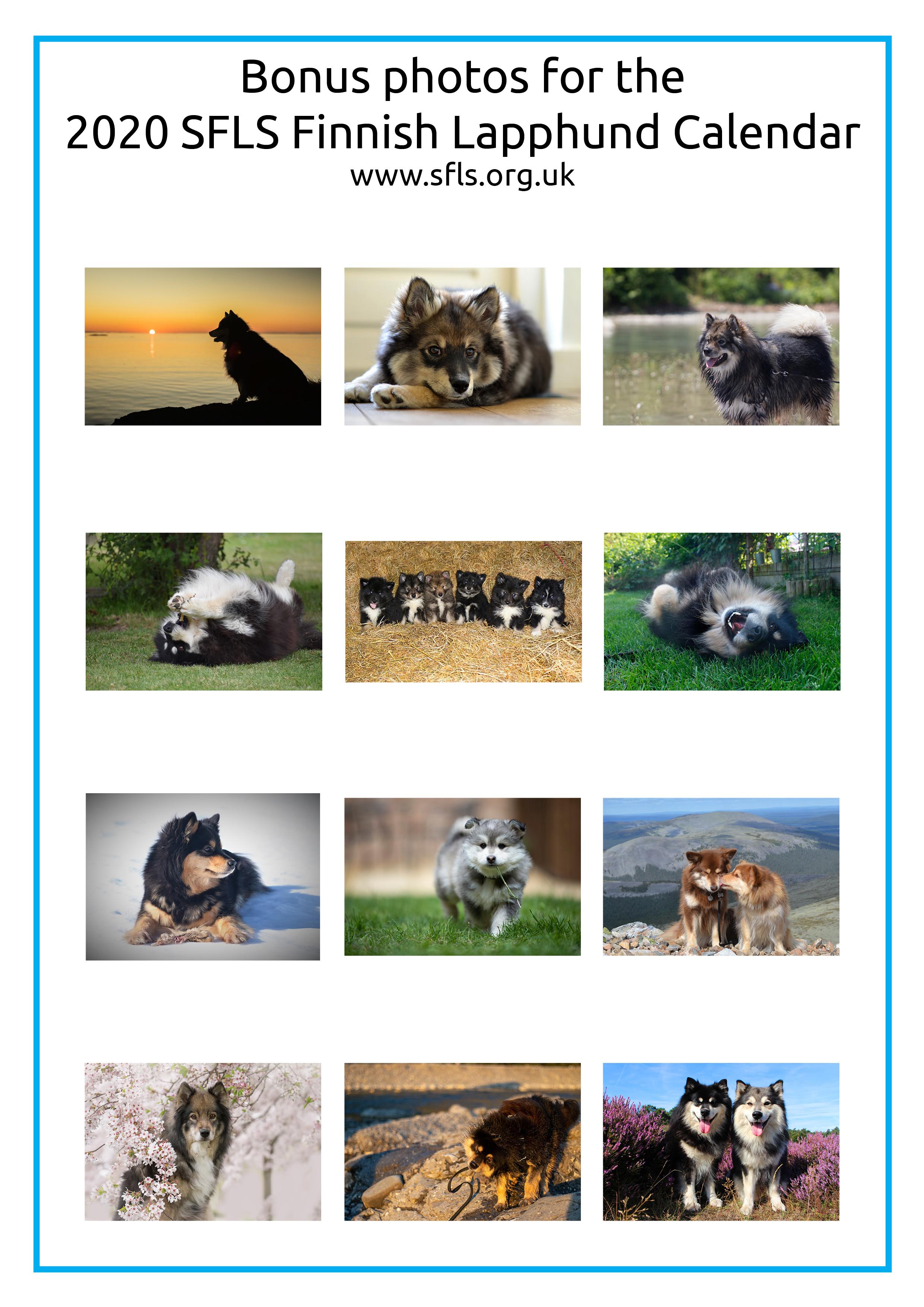 2020 Finnish Lapphund Calendar