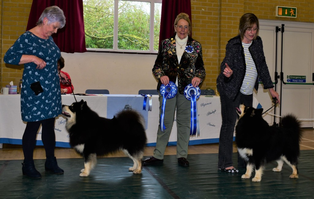 finnish lapphund of the year