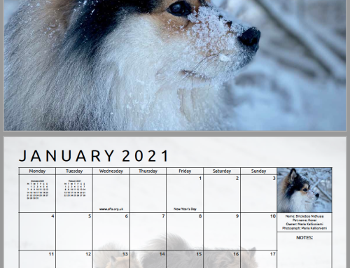 2022 Calendar Photo Submissions