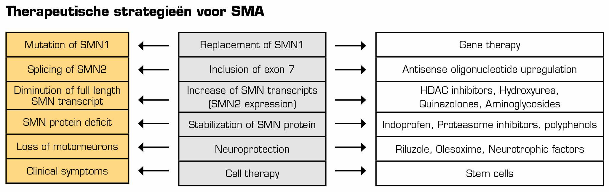 SPINAL-NEURON Spinale musculaire atrofie (SMA) - Presentaties gastsprekers themadag 24 oktober 2015