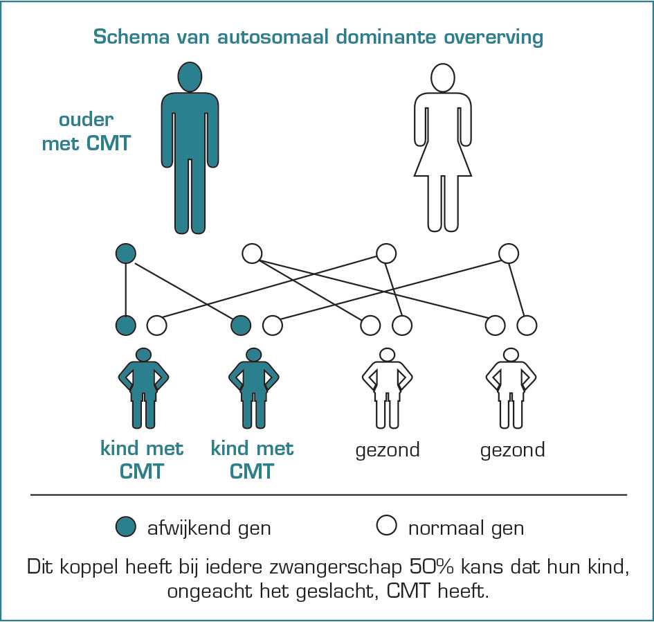 Schema1_CMT-1 Charcot-Marie-Tooth (CMT)