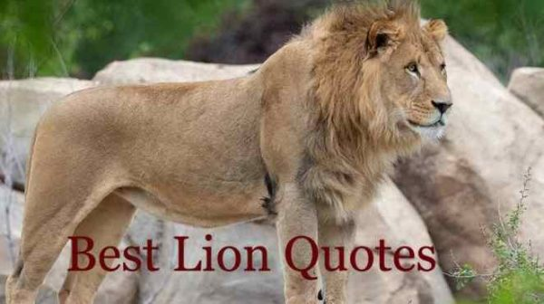 Lion Quotes On Strong, Love, Fun, Life, Line, Strength, King
