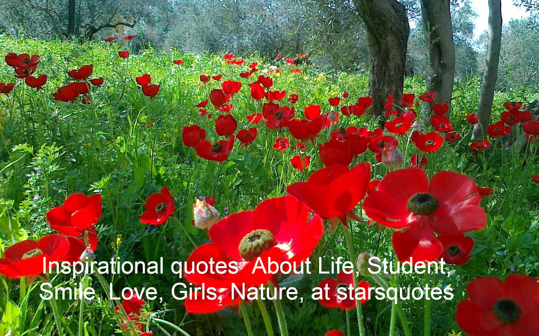 Inspirational quotes About Life, Student, Smile, Love, Girls, Nature, at starsquotes