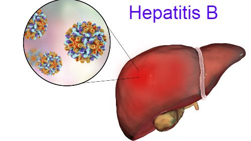 Hepatitis B Symptoms, Vaccine, Treatment, Transmission