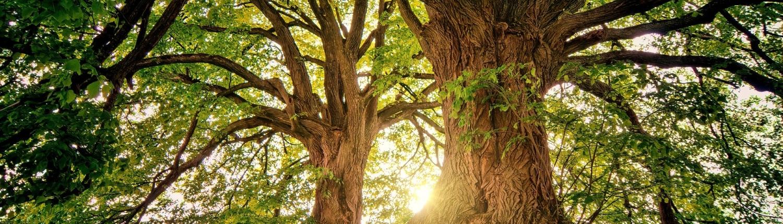 Träd Miljö Klimatsmart Klimat