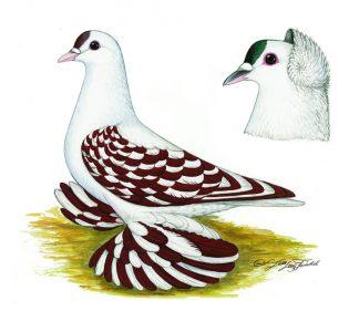 Böhmische Flügelschecken