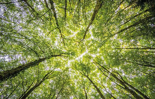 Nachhaltigenkeit