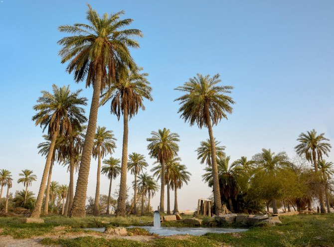 Saudi Arabia's Al-Ahsa Oasis registered by Guinness as world's largest