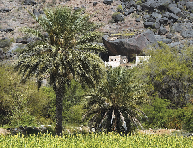 The Place: Asir's Al-Majarda village is home to a wide range of wildlife and rare plants