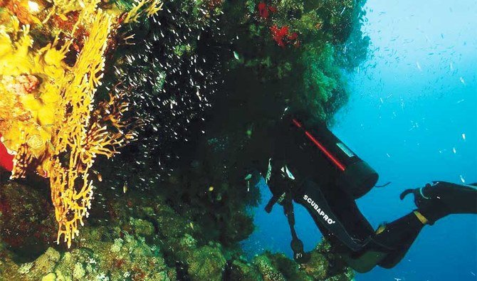 Bringing the beauty of Saudi Arabia's Red Sea to surface