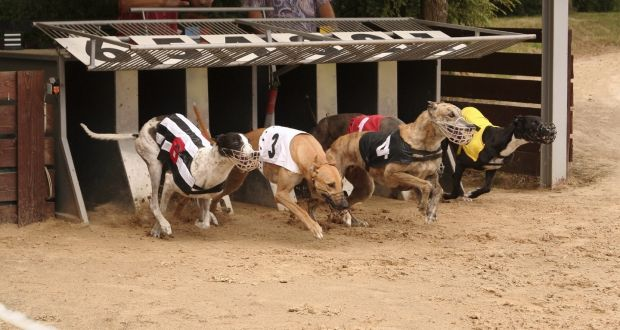 Greyhound Betting Site
