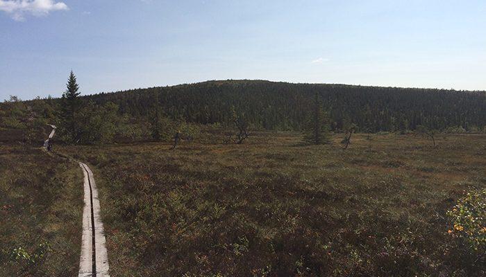Torgåsgården vandring
