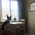 Hund på rummet