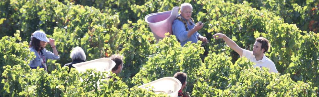 TourCathare og vin!