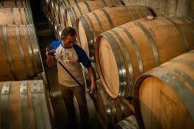 Kældermester tager vinprøve fra de store træfade med vin