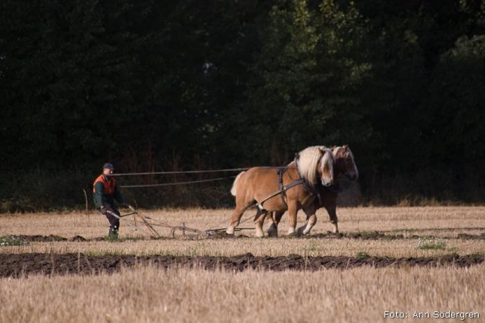 2009-10-10_008_DM_plojning