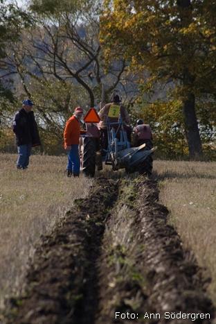 2009-10-10_097_DM_plojning