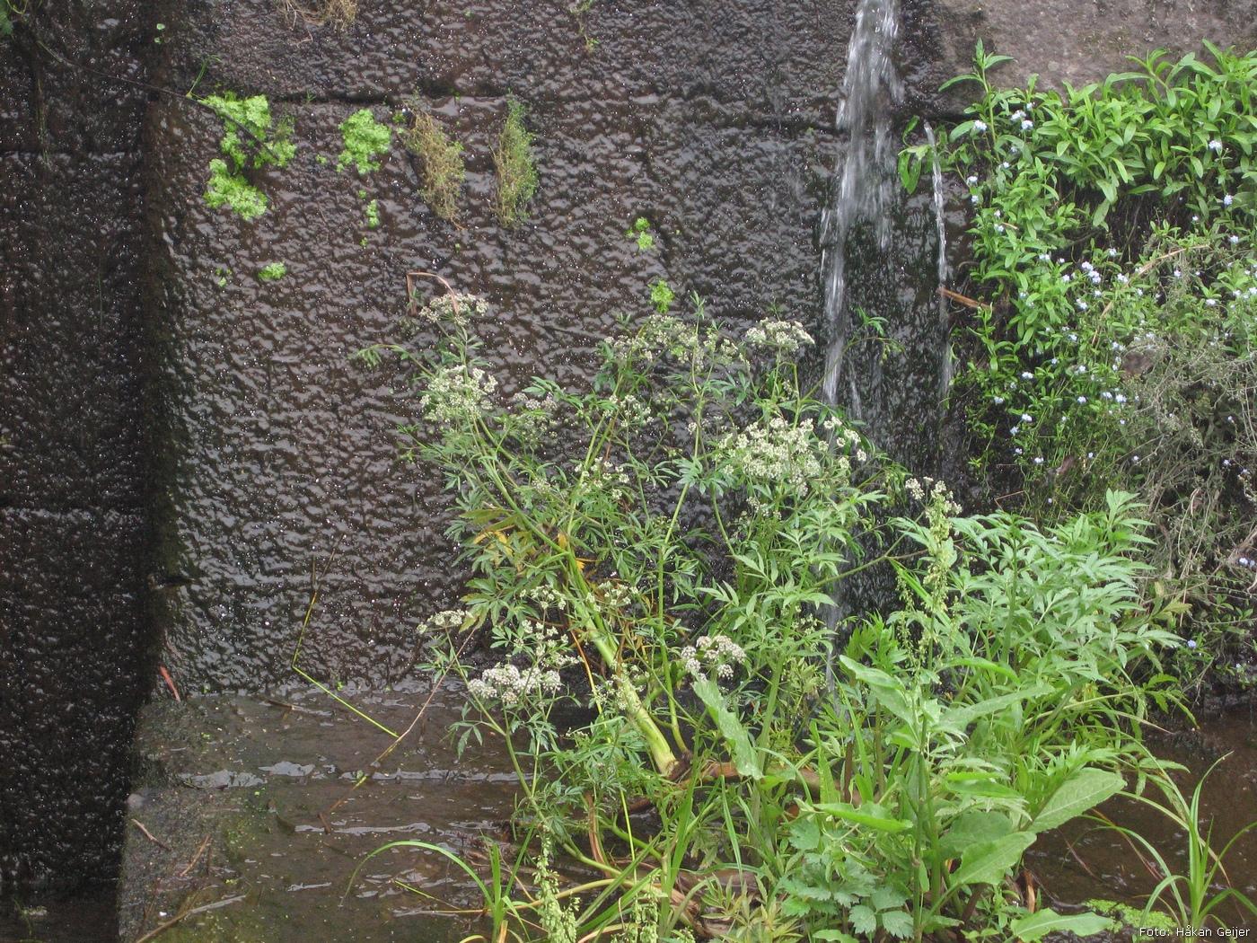 2011-07-30_03_Traktorresa