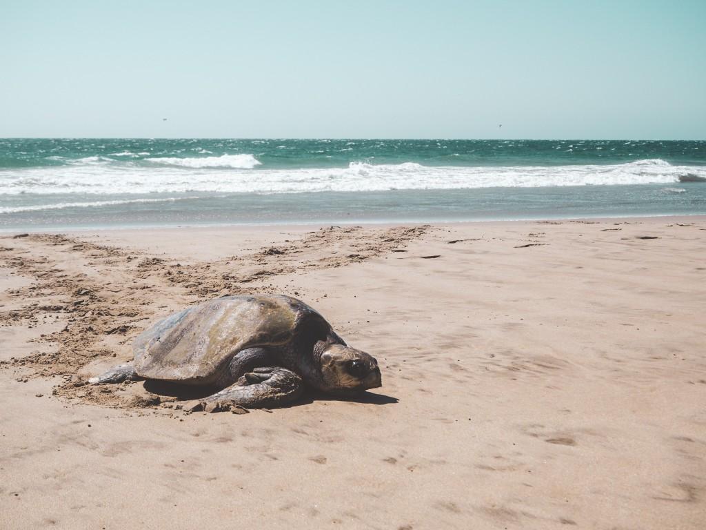 Mancora, Schildkröten und die Wale 5