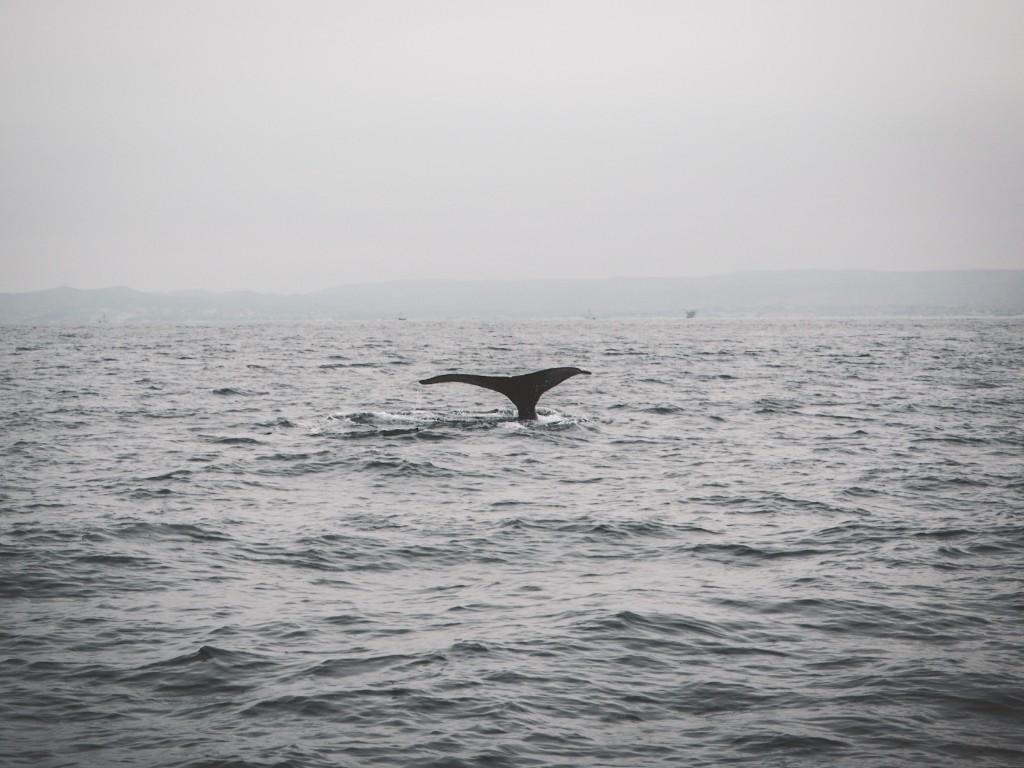 Mancora, Schildkröten und die Wale 6