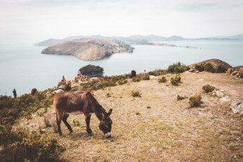 Machu Pichu - Conquest of paradise 20