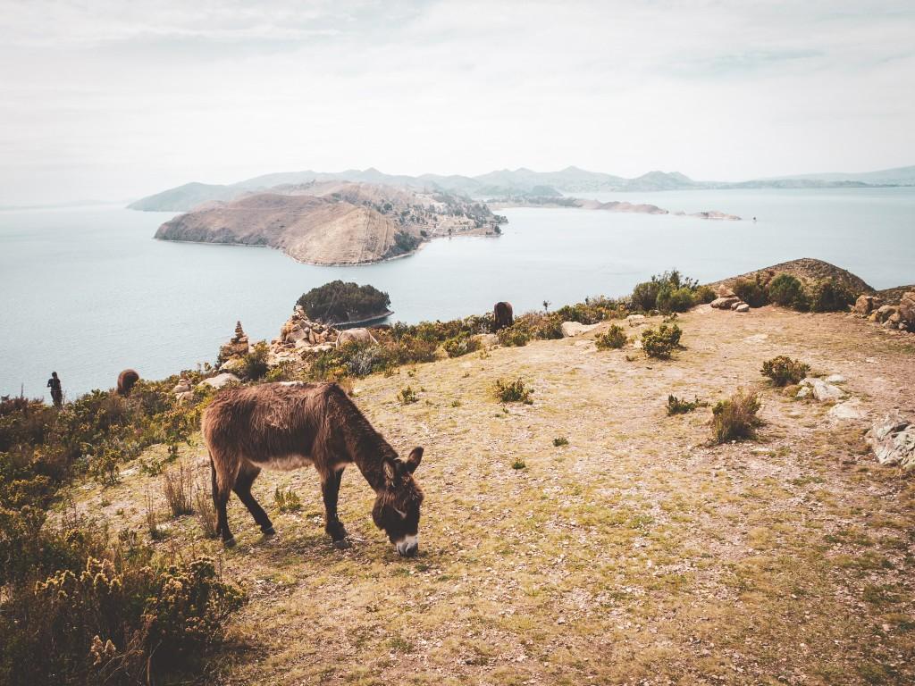 An der Copacabana und am Titikaka See 5