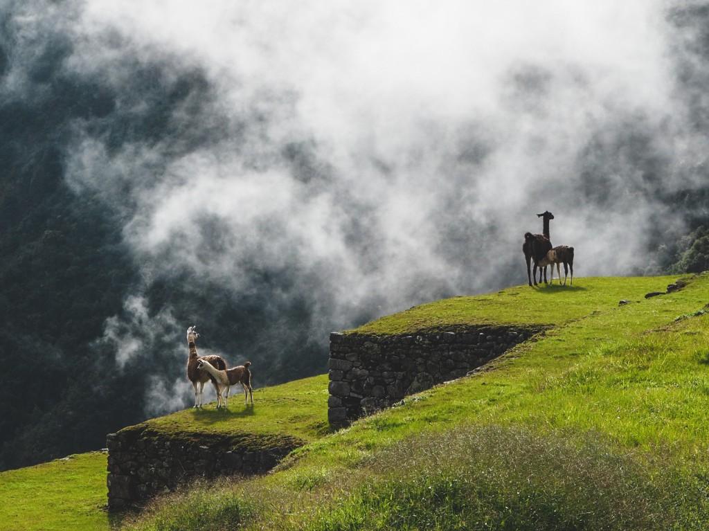 Machu Pichu - Conquest of paradise 12