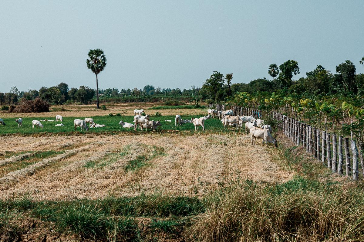 Battambang - Kambodschas Landleben 20