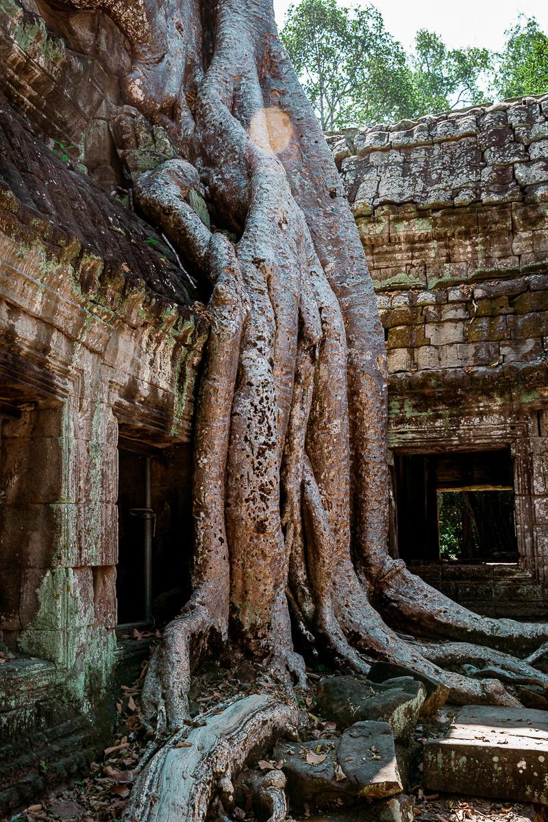 Angkor Wat und die lachenden Gesichter Kambodschas 20