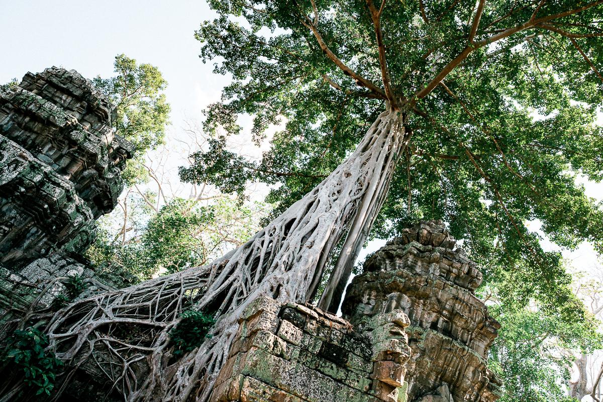 Angkor Wat und die lachenden Gesichter Kambodschas 17