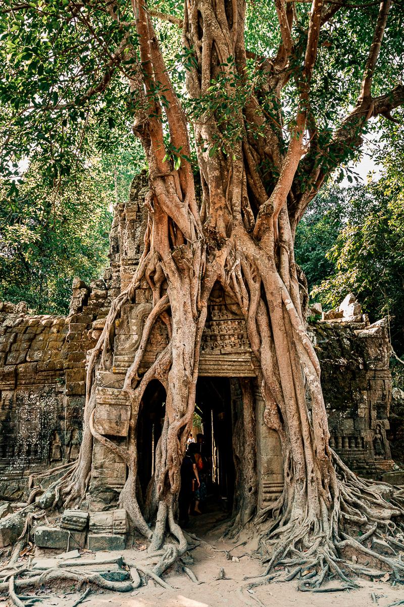 Angkor Wat und die lachenden Gesichter Kambodschas 37