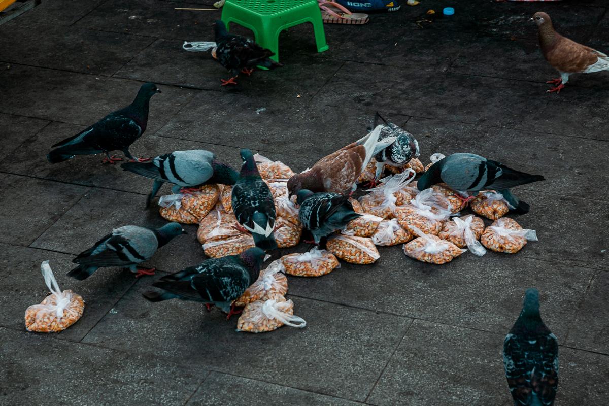 Die Gräueltaten von Phnom Penh 12