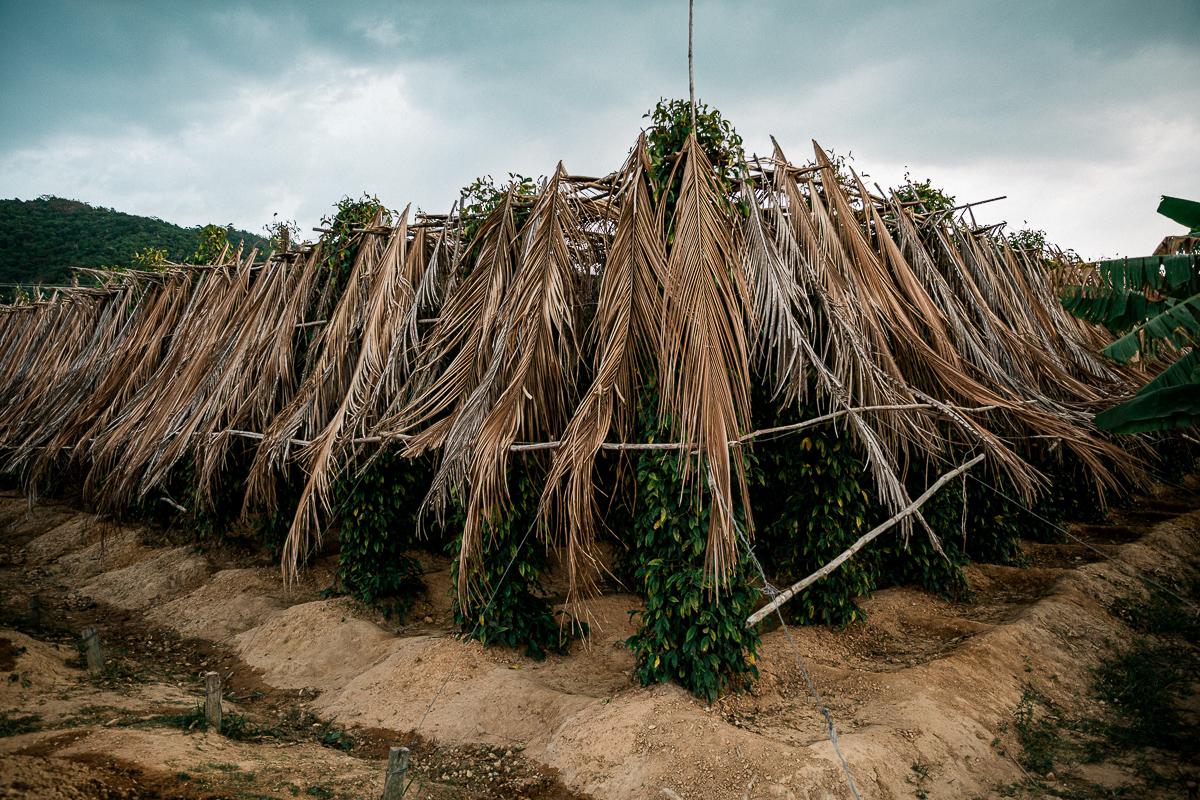 Kampot - Dorthin gehen wo der Pfeffer wächst 8