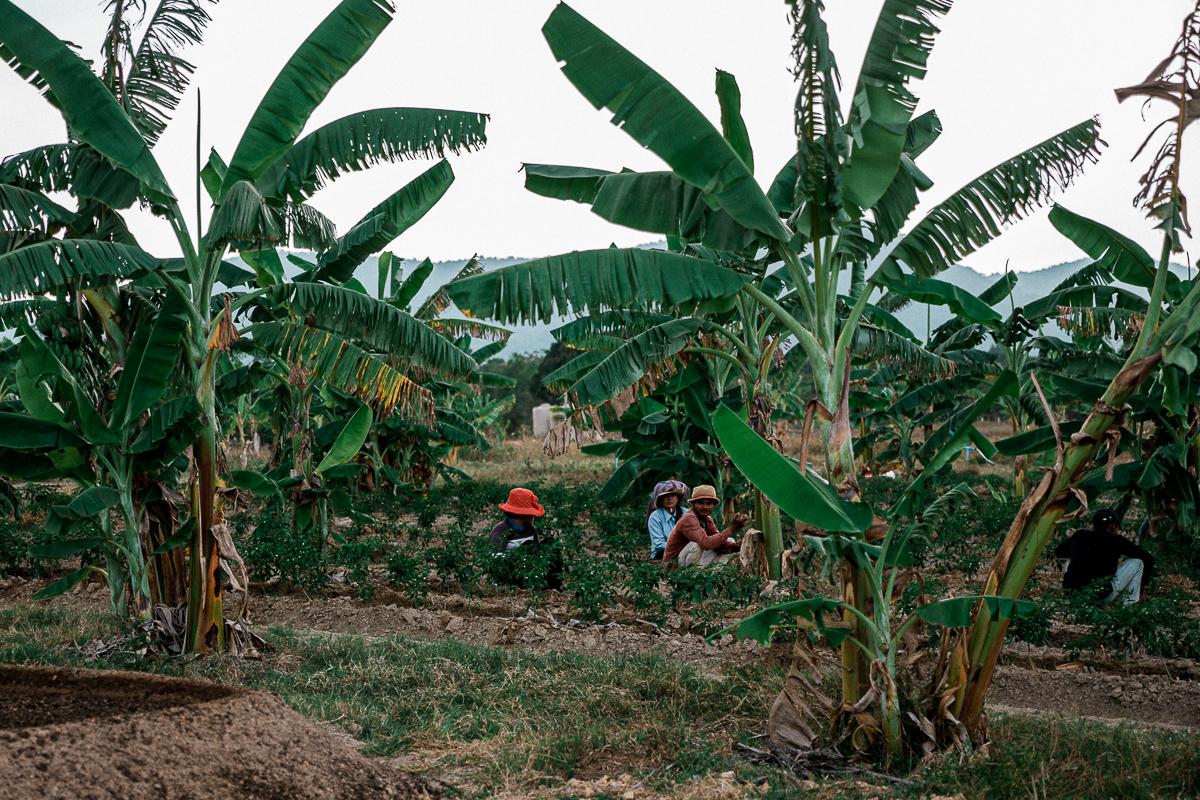 Kampot - Dorthin gehen wo der Pfeffer wächst 7