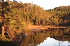 natur-rundt-treetop-Fiddan (10)