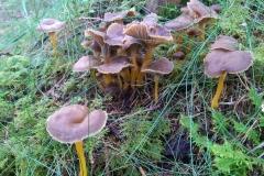 natur-rundt-treetop-Fiddan (3)
