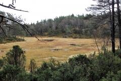 natur-rundt-treetop-Fiddan (8)