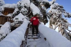 trapp til tretoppene