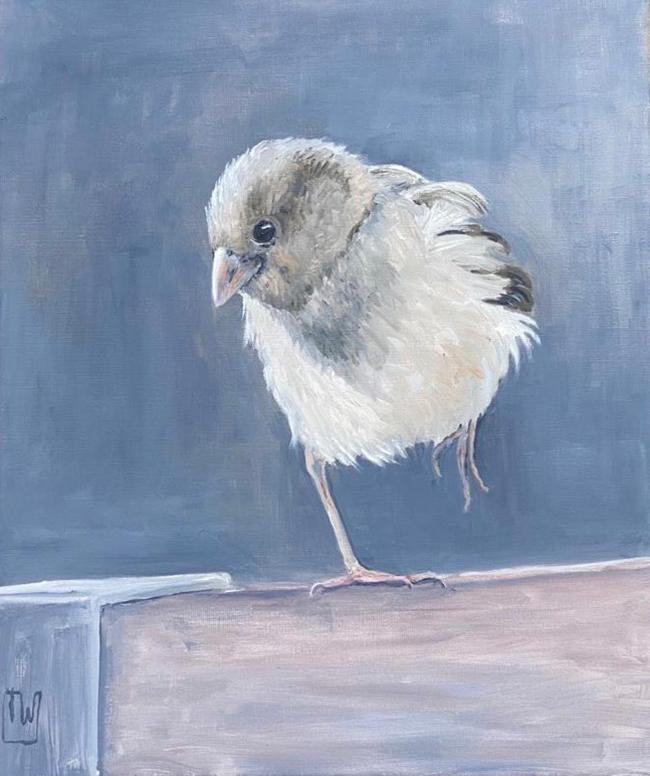 birdies #1 -50x60 - olie op doek